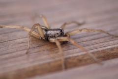 spiderclose2